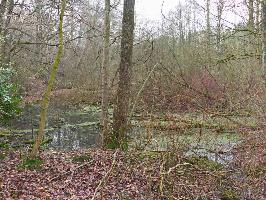 Vergehendes Biotop Pausmühlenbachtal, Foto © U.van Hoorn, NABU Ruhr
