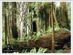 Alter Baumrest als Grundlage für neues Leben, Foto © K. Grebe