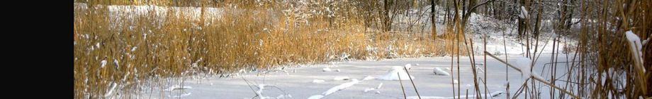 Teich im Vogelpark Essen, Foto © NABU, U. Eitner