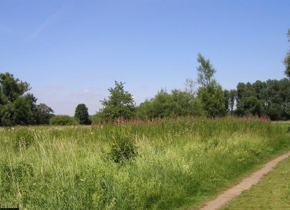 Große Nasswiesen, Foto © U. Eitner
