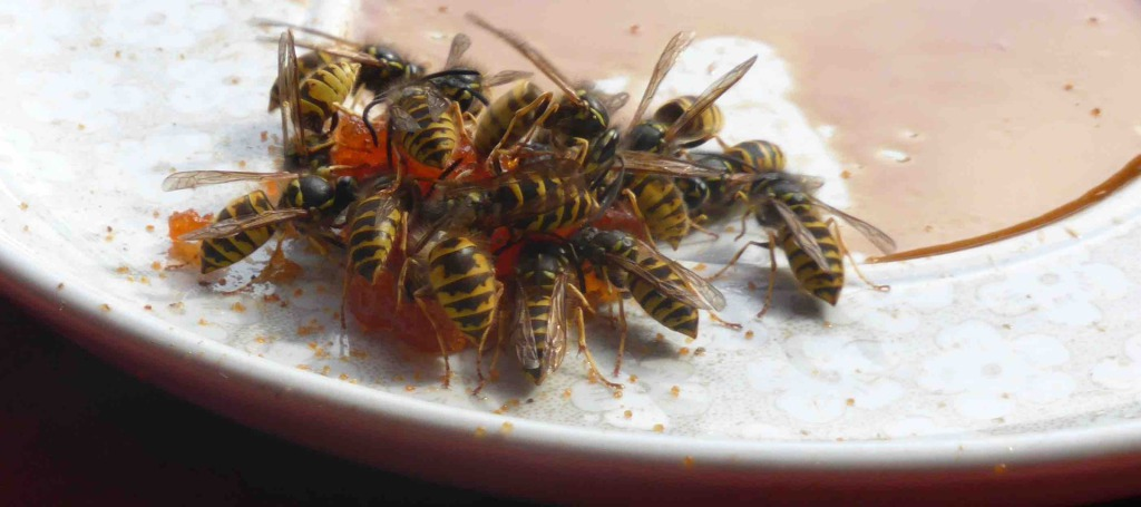 Das Ende einer Süßspeise in diesen Augusttagen - Foto © K. Grebe