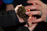 Erdkrötenpaar © C. Ruhrmann, NABU