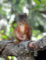 Eichhörnchen, Foto © Beate + Peter Heiks